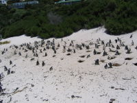 Boulders Beach, South African Icons, Cape Town Tourist attractions